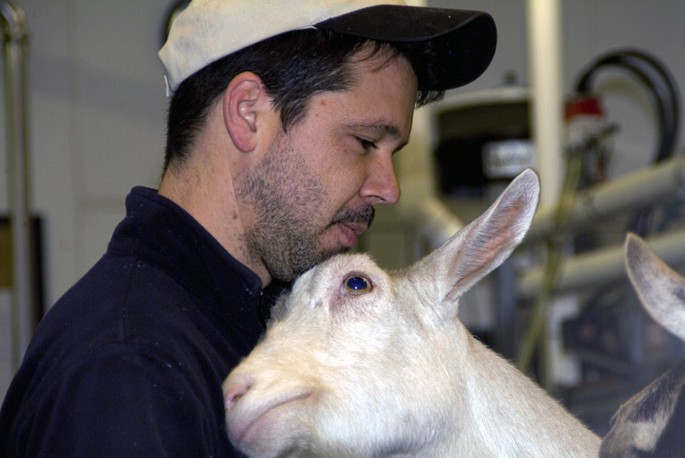 Redwood Hill Farm Manager Scott Bice with a Saanen milk doe.