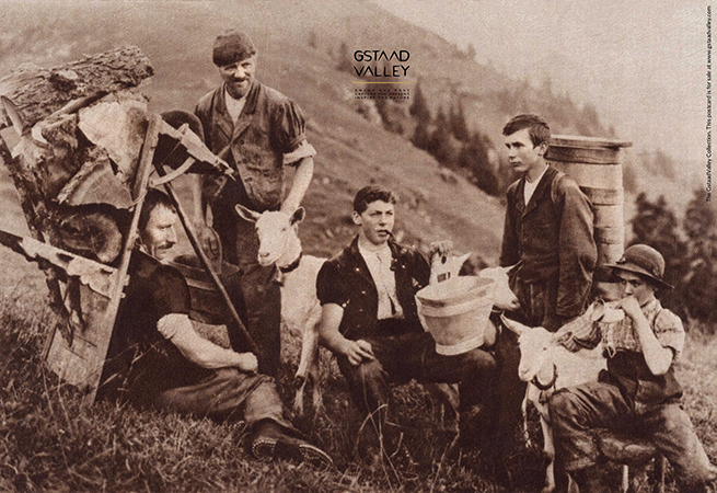 A rare black and white photograph illustrating the history of the Saanen dairy goat in Switzerland