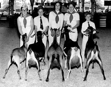 Bice family kids showing their goats at the fair circa 1970