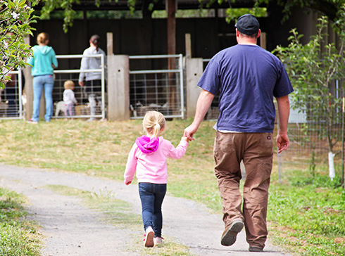 A father and daughter walking up Apple Blossom lane at the farm to play with the baby goat kids.
