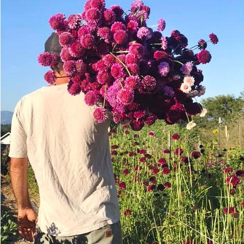 Farm Manager Scott harvesting fresh flowers