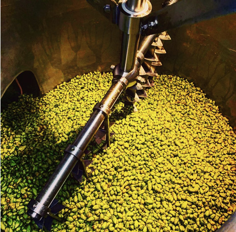Fresh hops in the tank during the brewing process.